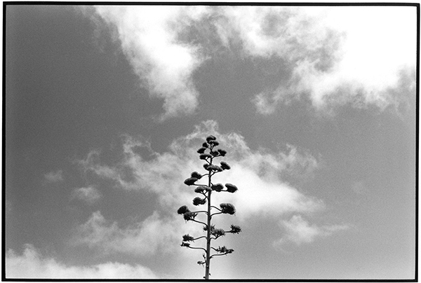 Cloudporn Fotografie Schwarzweiß Landschaft Landschaftsphotgraphie Landschaftsfotografie Landscape La Palma Agave Plant Pflanze Botanik