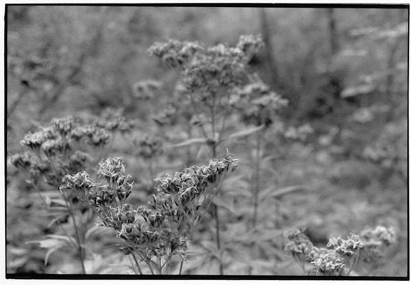 Brocken Harz Berg Fotografie Schwarzweiß Landschaft Landschaftsphotgraphie Landschaftsfotografie Landscape Pflanzen Botanik