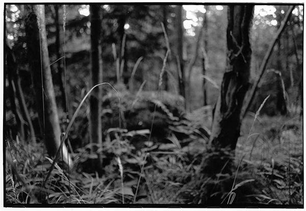 Harz Wald Fotografie Schwarzweiß Landschaft Landschaftsphotgraphie Landschaftsfotografie Landscape