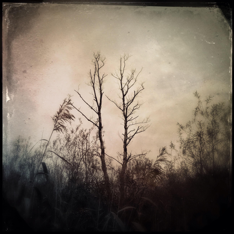 Verdorrte Bäume am Russer See in Kiel