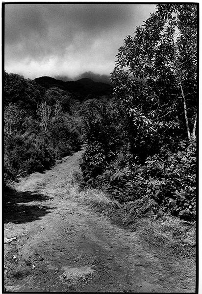 Cloudporn Fotografie Schwarzweiß Landschaft Landschaftsphotgraphie Landschaftsfotografie Landscape La Palma Wolken Weg Berge Baum