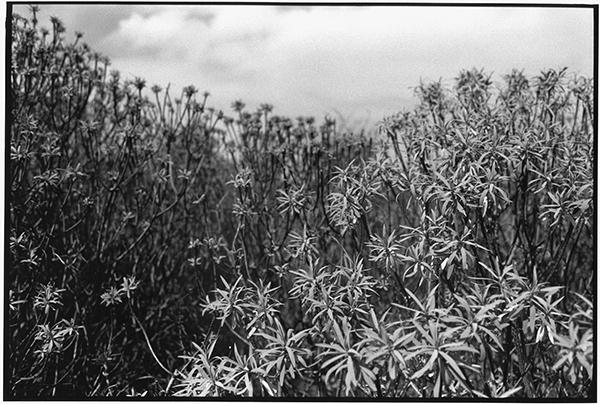 Fotografie Schwarzweiß Landschaft Landschaftsphotgraphie Landschaftsfotografie Landscape La Palma Pflanzen Botanik