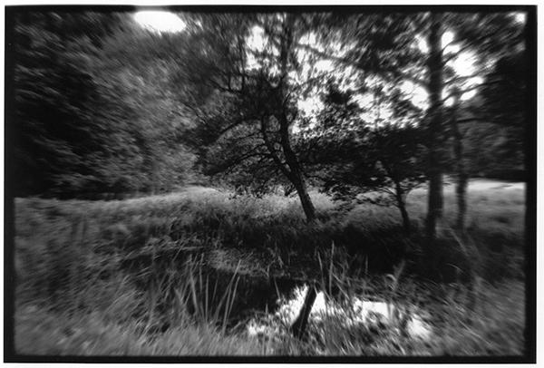 Fotografie Schwarzweiß Landschaft Landschaftsphotgraphie Landschaftsfotografie Landscape Schleswig-Holstein Sumpf Projensdorf Teich Gehölz Wald Bäume