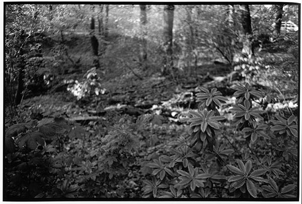 Fotografie Schwarzweiß Landschaft Landschaftsphotgraphie Landschaftsfotografie Landscape Schleswig-Holstein Wald Projensdorf