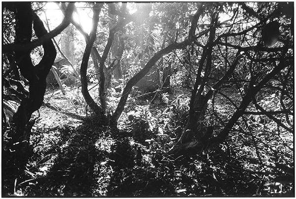 Fotografie Schwarzweiß Friedhof Kiel Eichhof Gegenlicht