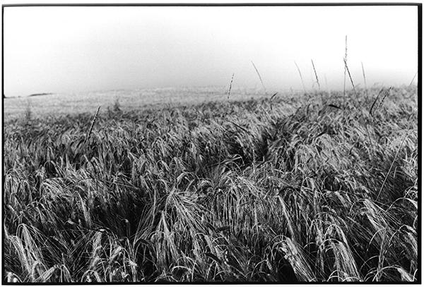 Fotografie Schwarzweiß Landschaft Landschaftsphotgraphie Landschaftsfotografie Landscape Schleswig-Holstein Kornfeld Ostholstein