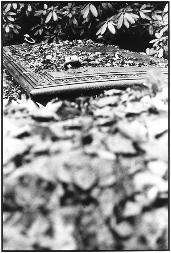 Fotografie Schwarzweiß Friedhof Kiel Südfriedhof Gruft Grabstätte Grab Laub